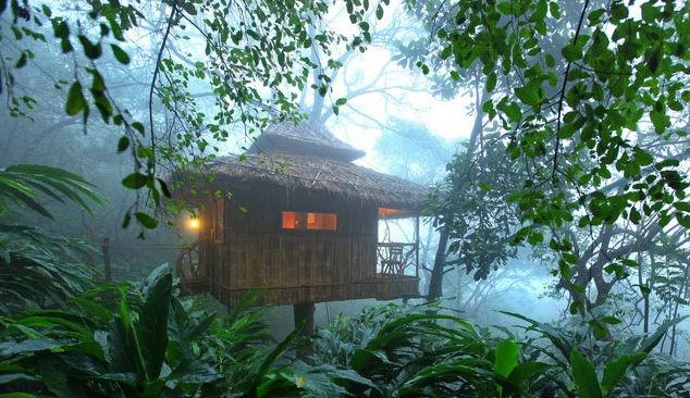 Thekkady Treehouse
