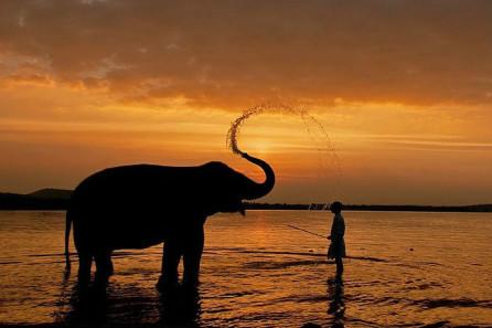 coorg elephant