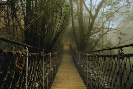 Wayanad hanging bridge